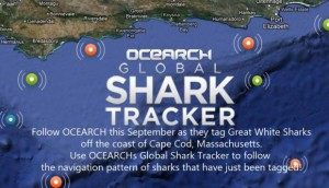 Image Source: http://ocearch.org/expeditionblog/global-shark-tracker/